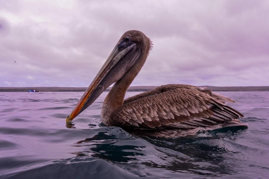galapagos - Galapagos_FB_2-45.jpg