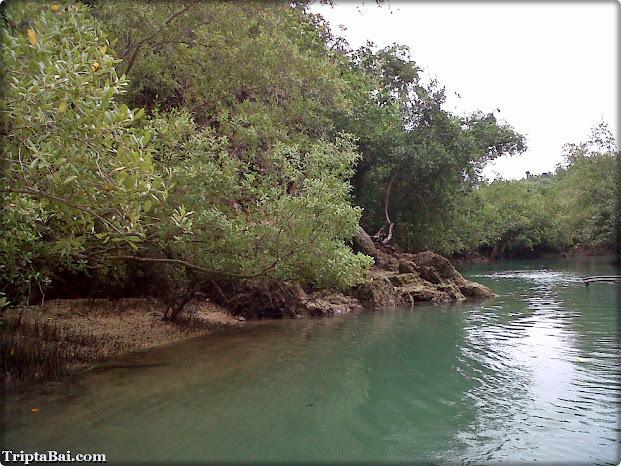 mangroves at bojo river