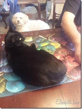 duncan (quilt cat) (7)