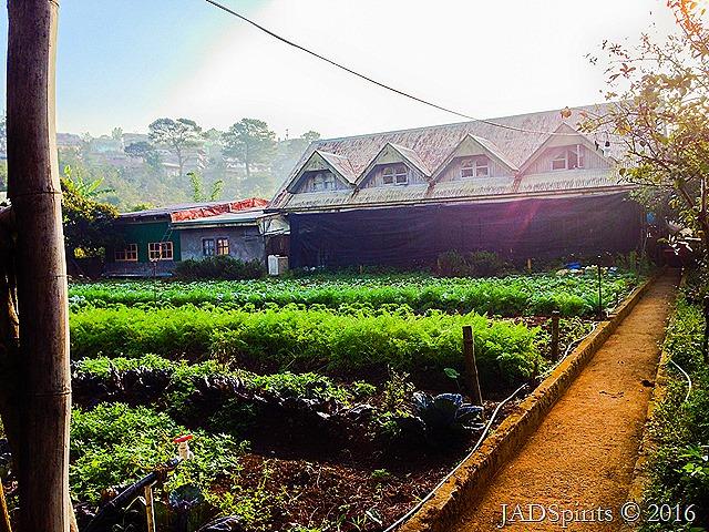 LOV Organic Vegetables