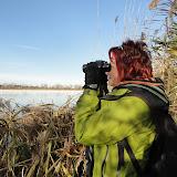 Oies blanches St-Louis de Gonzague - Novembre 2011