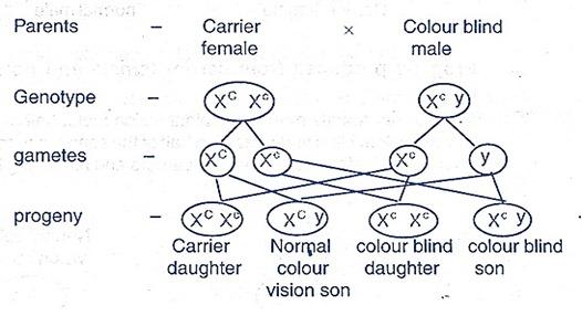 color blind -inheritance