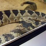 Houston Zoo - 116_8403.JPG