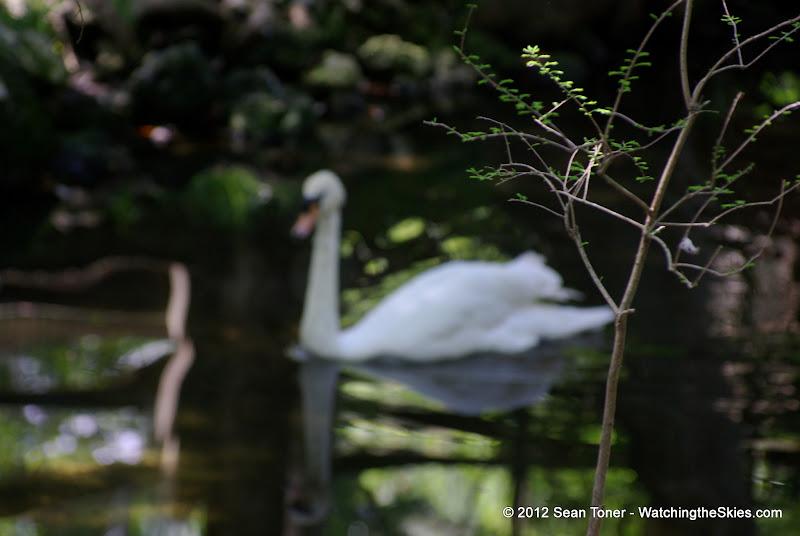 04-07-12 Homosassa Springs State Park - IMGP4562.JPG