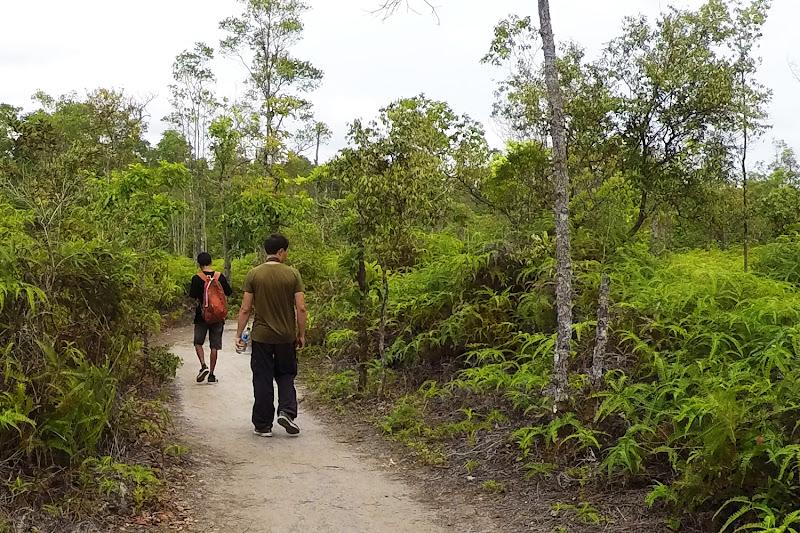 Camino de helechos en Borneo