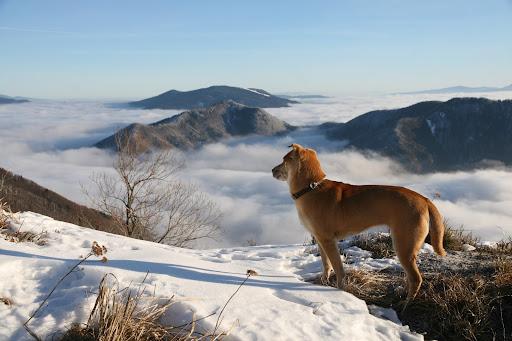 Pohľad z Osnice