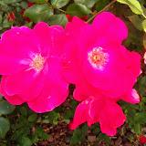 Gardening 2015 - 116_7683.JPG