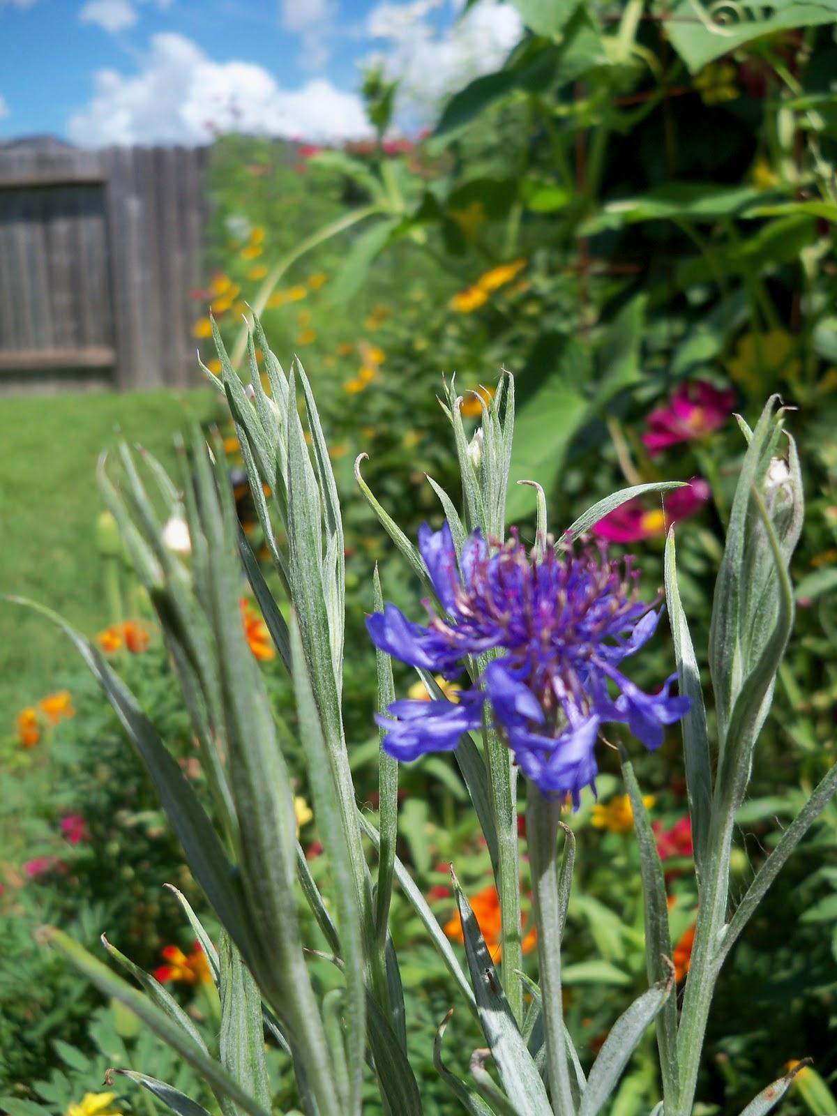 Gardening 2010, Part Three - 101_4377.JPG