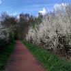 5.3km_bois_Offlarde.jpg