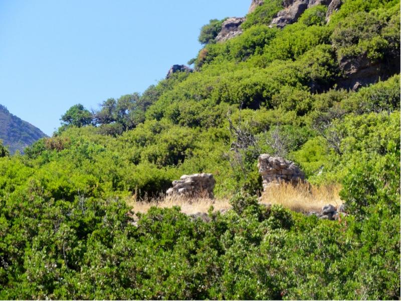 To rester av murvegger som stikker opp mellom vegetasjonen.