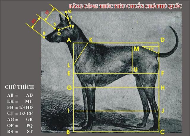 Chó Phú Quốc. Đặc điểm tính cách chó Phú Quốc thuần chủng
