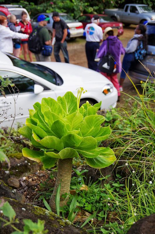 06-26-13 National Tropical Botantial Gardens - IMGP9452.JPG