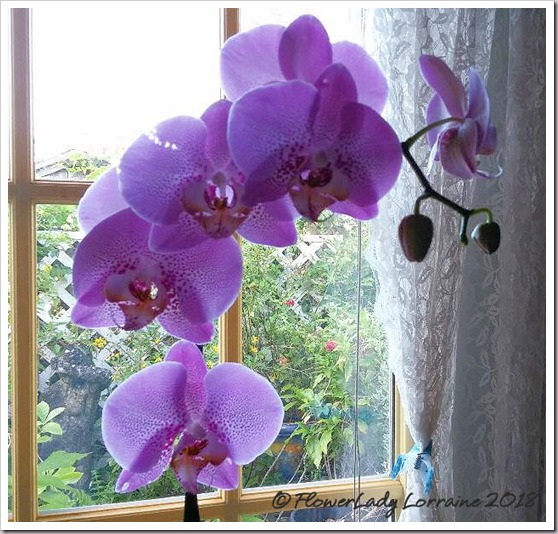 08-28-orchid-from-mary