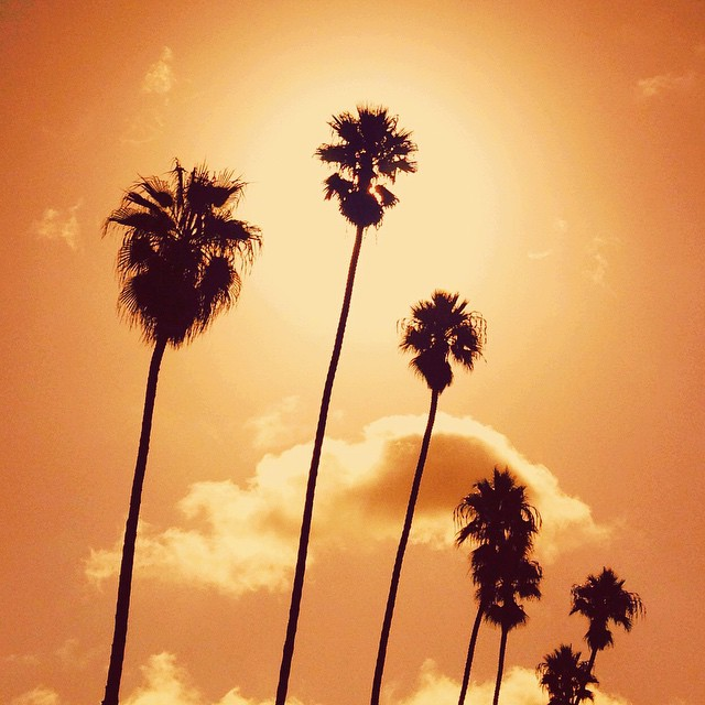 INSPIRATION: Palm Trees