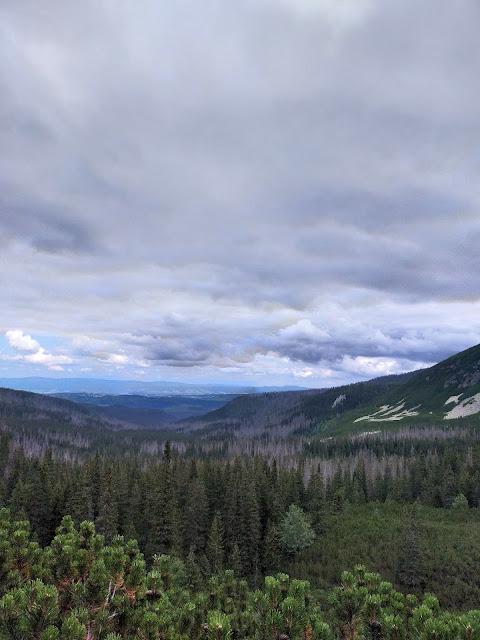 las na szczycie, w oddali Beskidy