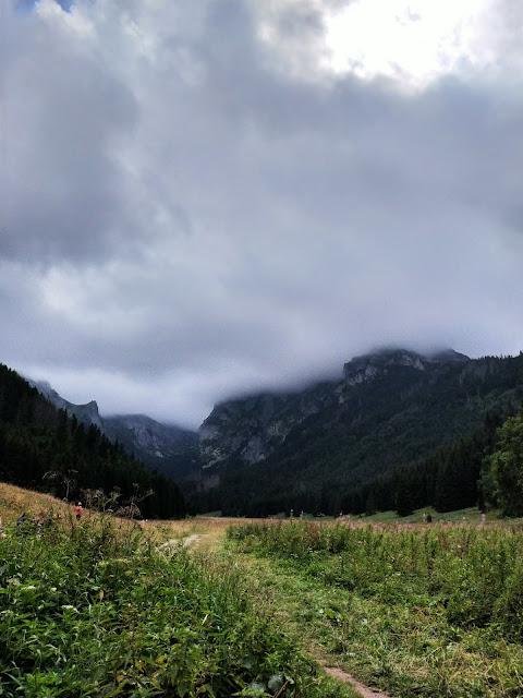 łąka, w oddali Tatry wysokie przysłonięte chmurą