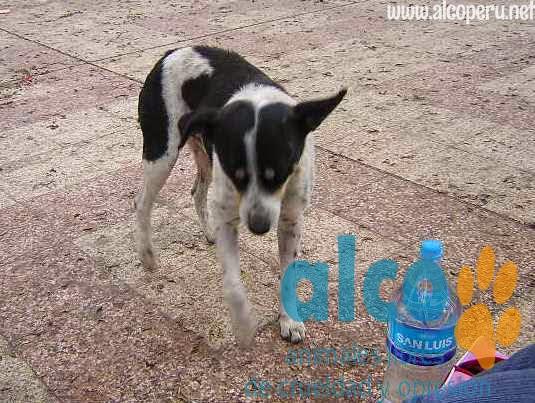 1era visita asistencia animales damnificados terremoto  Pisco 2007 (16)
