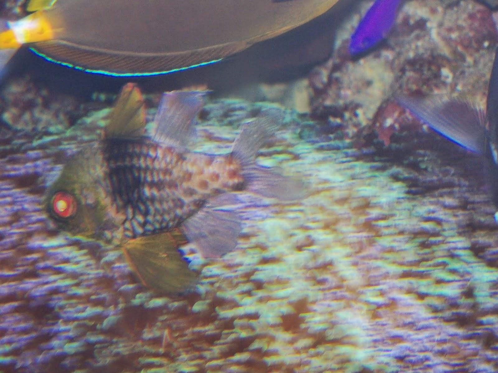Downtown Aquarium - 116_3993.JPG