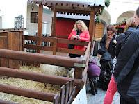 35 A gyerekek szívesen etetik a báráynokat.JPG