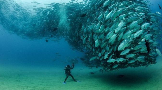 Imagens que o farão pensar duas vezes antes de entrar na água 16