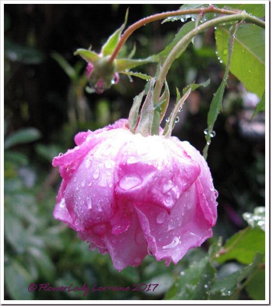 02-22-carnation