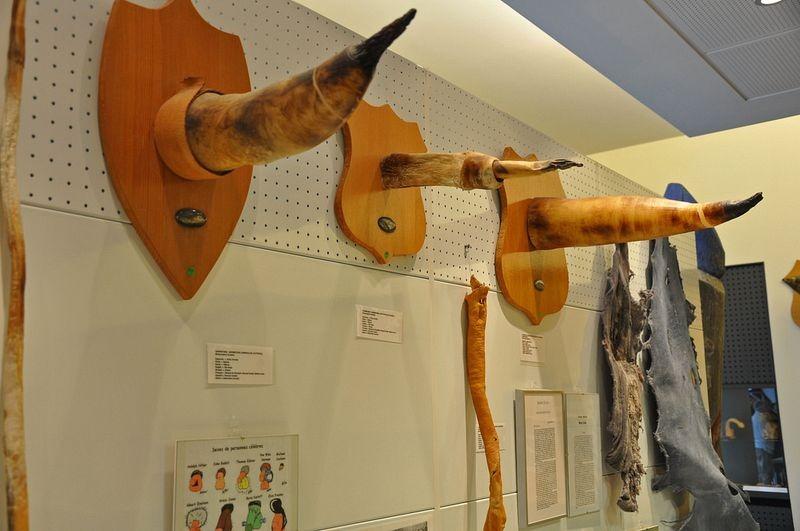 icelandic-phallological-museum-8