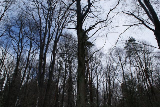 Zajęcia terenowe 29 lutego 2012 - DSC06212_1.JPG