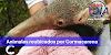 ANIMALES RESCATADOS POR CORMACARENA: REUBICADOS EN ZOOLÓGICO DE CALI