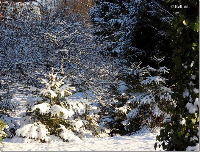 DSCN2697 Bäume