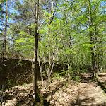 Bois du Boulay