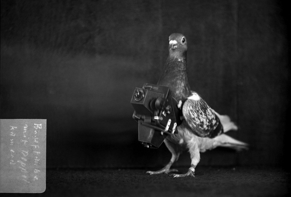 neubronner-pigeon-photography-126?imgmax=1600 The Pigeons Who Took Photos Random