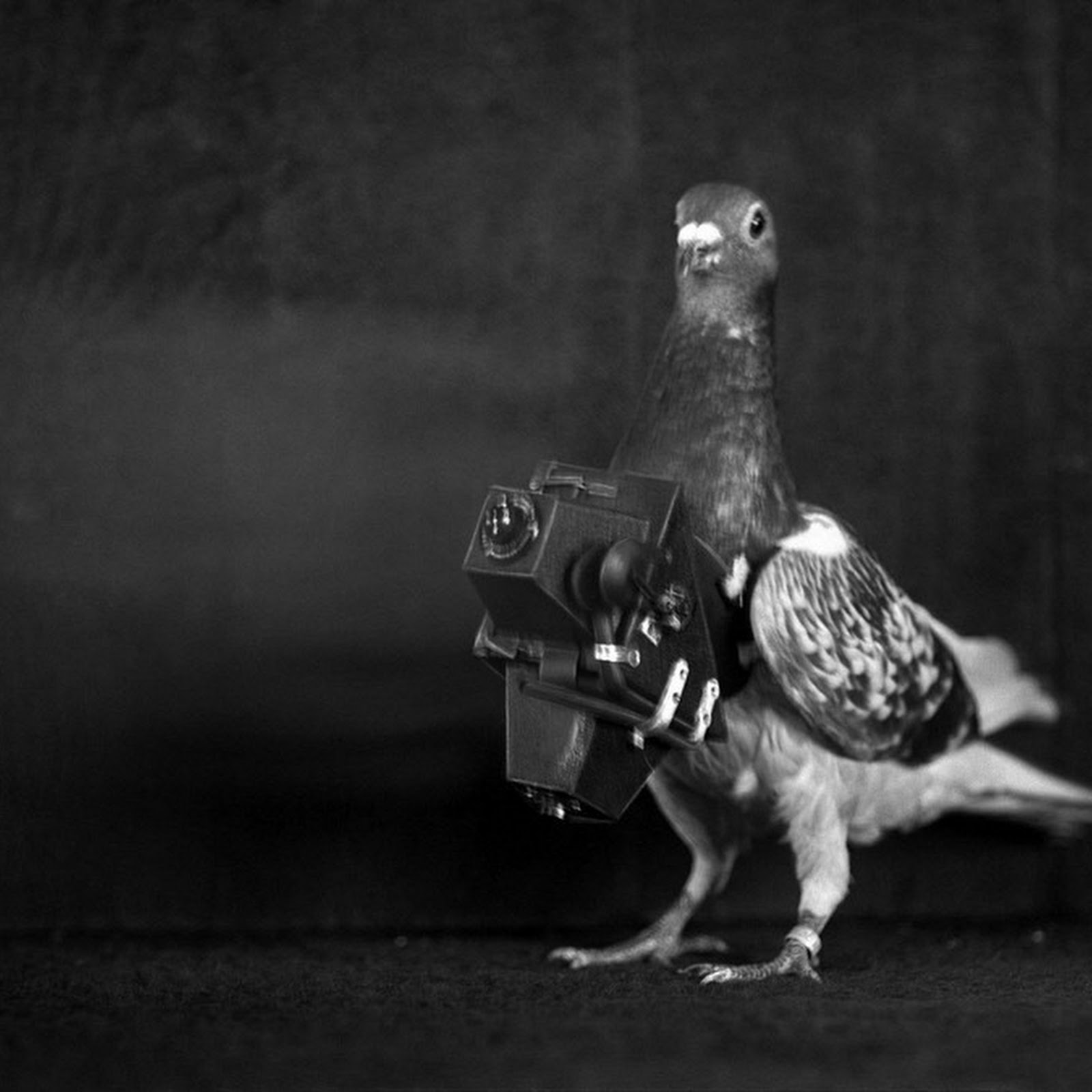 The Pigeons Who Took Photos