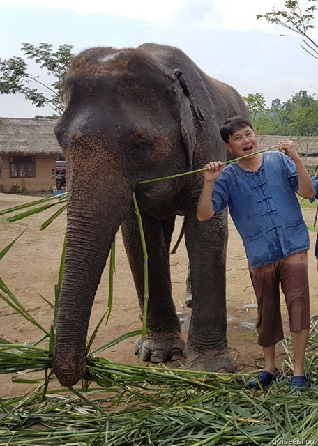 With the elephant at Lanna Kingdom Elephant Sanctuary
