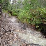 Creek crossing south of Bittangabee Bay (106981)