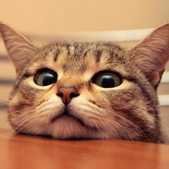 Cute=Cat01 (2)