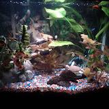 Fish - IMG_20120930_211343.jpg