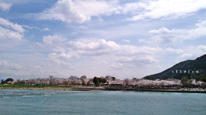 2  京都 嵐山渡月橋 賞櫻 櫻花 Saga Par 五色霜淇淋 彩色霜淇淋