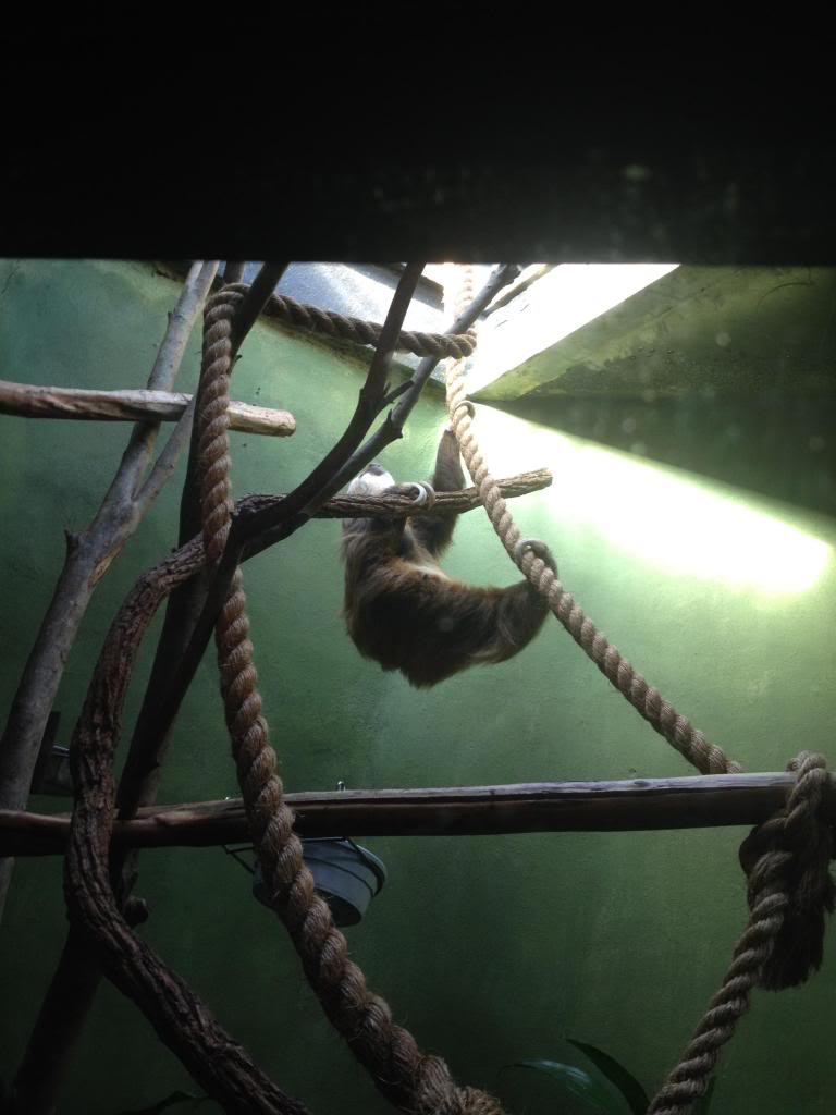 Sloth zps1e367a75