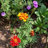 Gardening 2011 - 100_8575.JPG