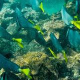 galapagos - Galapagos_FB-128.jpg