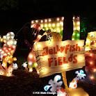 lights 2006 CIMG0024.JPG