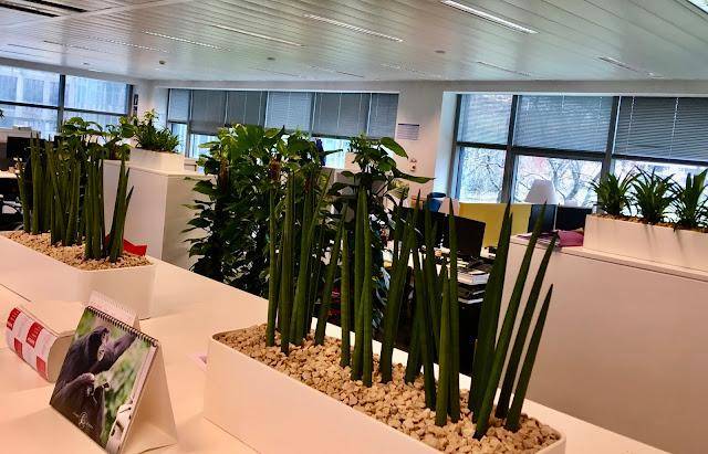 sansevieria kamerplanten kopen voor bedrijven of particulier prijzen op aanvraag voor buiten binnen hangend of in pot tegen muur met bloemen op terras in de tuin en tegen wand