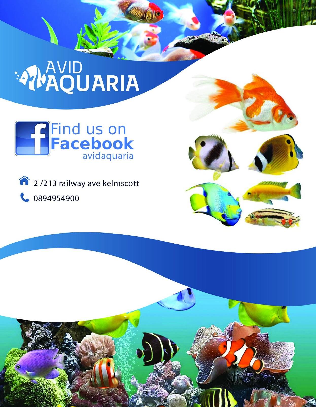 Avid aquaria,aquarium shop perth : Avid aquaria,aquarium