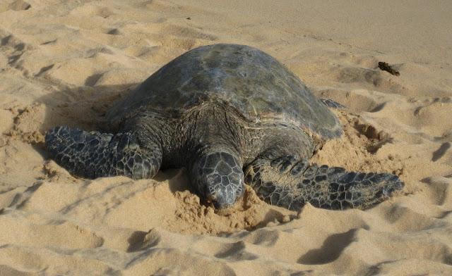 2012 - IMG_6166_Poipu_Beach.JPG