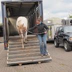 paarden4daagse Zorgvliet 2012 047.jpg