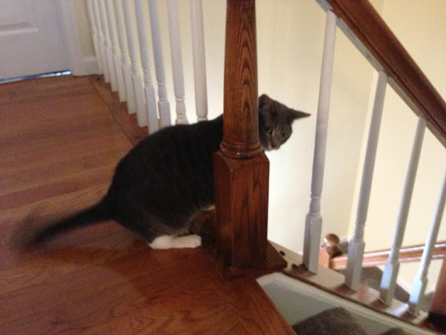 jump kitty