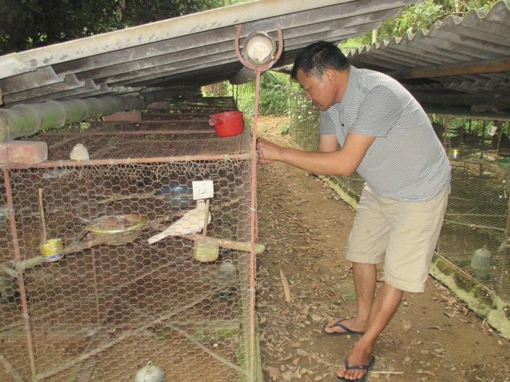 Thái Nguyên: Làm giàu từ mô hình nuôi chim cu gáy - 5733db8ca7c61