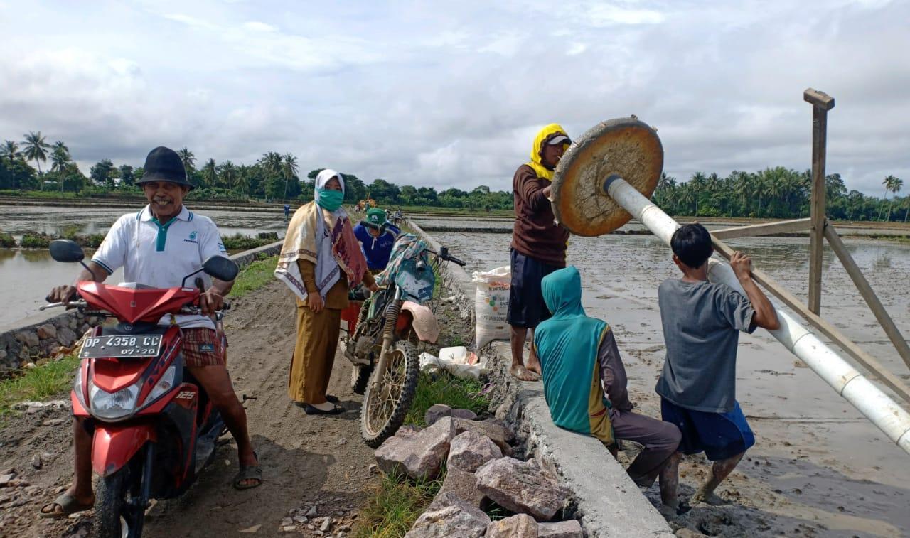Penyuluh Pantau Budidaya Padi Sistem Tabela Pada Gapoktan Desa Abbkongan