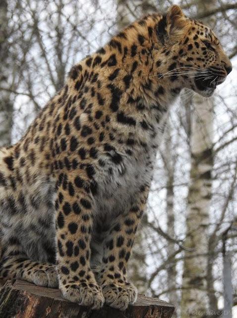 Looduskalender • View topic - Tallinn Zoo