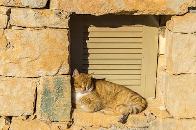 Geocaching auf Malta: Der Süden - die Tempel von Ħaġar Qim und Mnajdra - Die Katze genießt die Sonne
